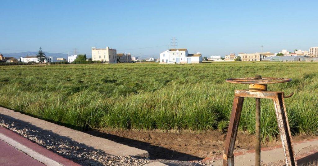 Proceso de siembra y cultivo de la chufa
